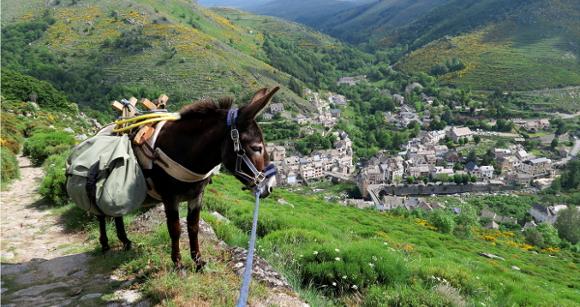 Kaïcha the donkey