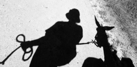 Donkey shadow
